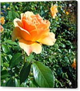 My Love Is Like A Rose Acrylic Print by Kay Gilley