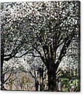 My Neighborhood In Spring Acrylic Print