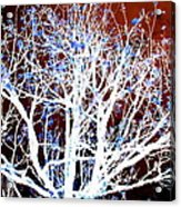 My Neighbor's Tree II Acrylic Print