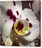 My Orchid Acrylic Print