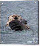 My Otter Acrylic Print