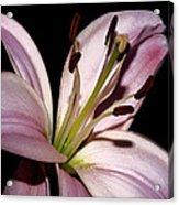 My Pink Acquisition Acrylic Print by Camille Lopez
