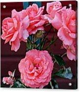 My Rose Garden Acrylic Print by Victoria Sheldon
