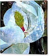 My Sweet Magnolia Acrylic Print