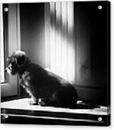 My Thoughtfull Dog Acrylic Print
