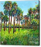 Myakka Palms Acrylic Print