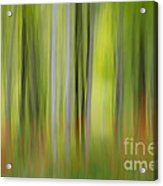 Mysterious Forest 2 Acrylic Print