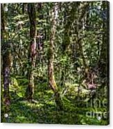 Mysterious Forest Acrylic Print