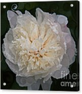 Mysterious White Peony Abstract Painting Acrylic Print