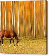 Mystic Autumn Grazing Horse Acrylic Print