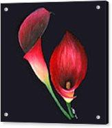 Mystic Calla Lillies Acrylic Print