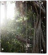 Mystic Jungle Acrylic Print