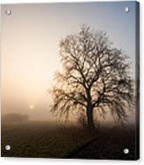 Mystic Morning Acrylic Print by Davorin Mance