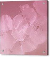 Mystic Orchid Acrylic Print