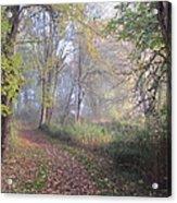 Mystical Path Acrylic Print