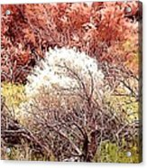 Mystical Bushes Acrylic Print