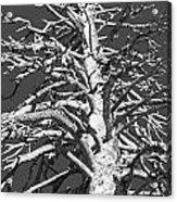 Naked And Barren Acrylic Print