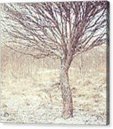 Naked Willow Tree. Winter Poems Acrylic Print