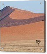 Namib Lanscape Acrylic Print