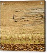 Namibian Desert Scene 1 Acrylic Print