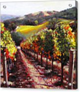 Napa Hill Side Vineyard Acrylic Print