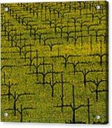 Napa Mustard Grass Acrylic Print by Garry Gay