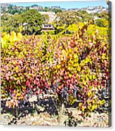 Napa Valleys Best Acrylic Print