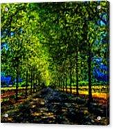 Napa Vineyard 2 Acrylic Print by Cary Shapiro