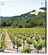Napa Vineyard With Hills Acrylic Print