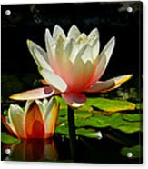 Napa Water Lilies 003 Acrylic Print