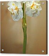 Narcissus Soft Acrylic Print