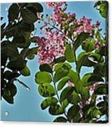Nashville Flowers Acrylic Print