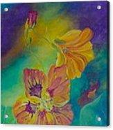 Nasturtium Dream Acrylic Print