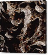 Nasute Termite Nest Amazonian Peru Acrylic Print