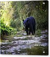 National Forest Bear Acrylic Print
