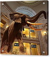 National Museum Of Natural History Acrylic Print