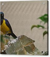 National Zoo - Birds - 01137 Acrylic Print