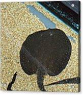 National Zoo - Fish - 011315 Acrylic Print