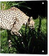 National Zoo - Leopard - 011311 Acrylic Print