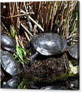 National Zoo - Turtle - 01138 Acrylic Print
