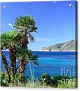 Native Fan Palms In Sant Elm Acrylic Print