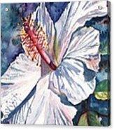 Native Hawaiian Hibiscus Acrylic Print