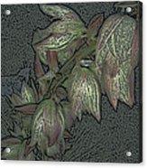 Native Plant 1 Acrylic Print