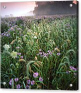 Native Prairie Sunrise Acrylic Print by Ray Mathis
