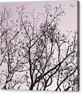 Native Texas Pecan Silhouette Acrylic Print