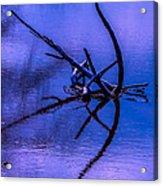 Natural Abstract Acrylic Print