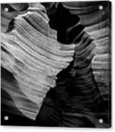 Natural Beauty Of Antelope - Black And White Acrylic Print