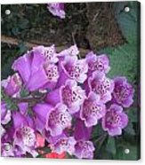 Natural Bouquet Bunch Of Spiritul Purple Flowers Acrylic Print