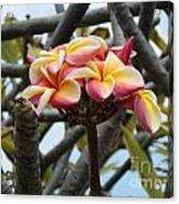 Natural Bouquet  Acrylic Print