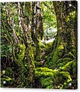 Natural Emeralds. I Wicklow. Ireland Acrylic Print